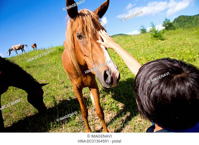 Kid Playing with Horse