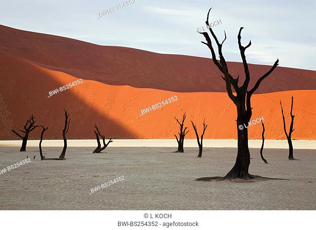 dead trees in Dead Vlei, Namibia, Sossusvlei, Namib Naukluft National Park, Namib Naukluft National Park