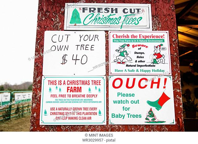 Signs at a Christmas tree farm