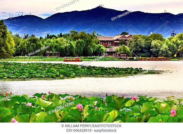 Pink Lotus Pads Garden Boat Buildings Summer Palace Beijing China