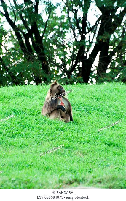 monkey is sitting on a grass
