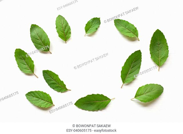 Holy basil fresh leaves on white