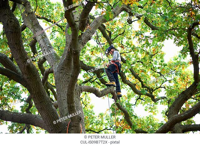 Young male trainee tree surgeon standing on tree branch