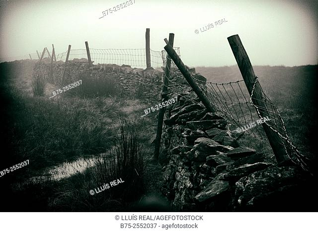 Dry stone wall with poles and a metal fence in a misty day. Yorkshire Dales, North Yorkshire, Skipton, England, UK, Europe
