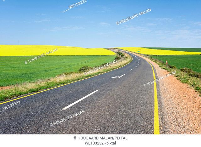 Landscape photo of a winding road in colourful farmlands on a sunny day. Overberg, Western Cape, South Africa