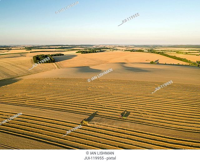 Harvest aerial landscape of combine harvester cutting summer wheat field crop in sunset landscape light on farm