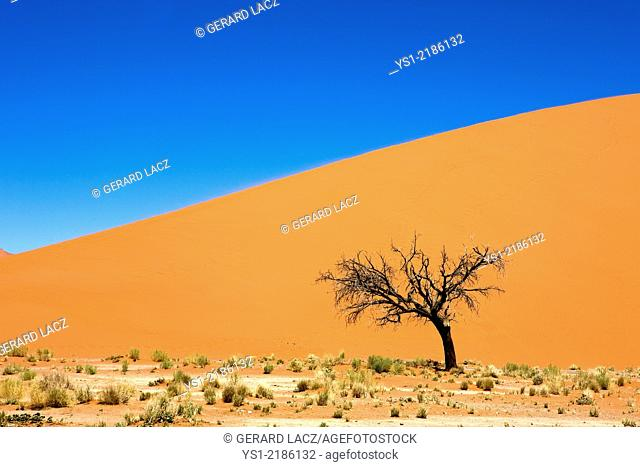 Desert of Namib, Namib-Naukluft Park, Sossusvlei Dunes, the Dune 45, Namibia