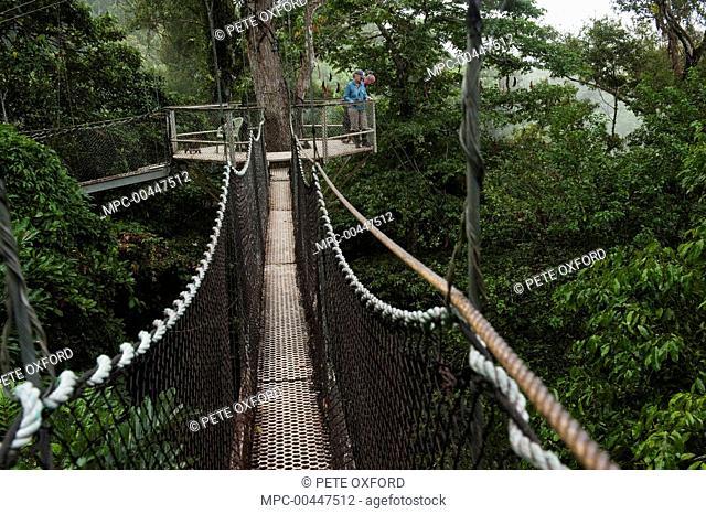 Tourists on canopy walkway Atta Lodge Iwokrama Rainforest Reserve Guyana & Iwokrama Stock Photos and Images | age fotostock