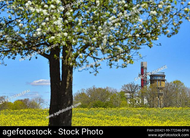 20 April 2020, Brandenburg, Joachimsthal: Behind a yellow flowering meadow is the water tower with a viewing platform and elevator from the Biorama Project
