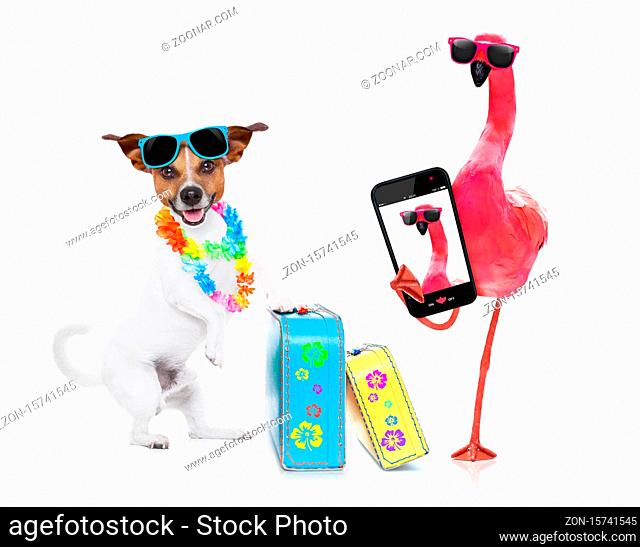 dog and owner sitting close together at the beach on summer vacation holidays, close to the ocean shore and a pink gay flamingo