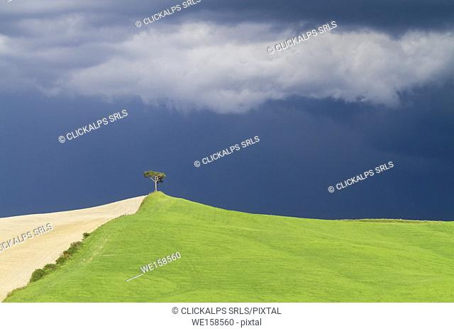 A lonely tree standing on a hill during a spring storm in the zone called Crete Senesi, Monteroni d'Arbia, Tuscany, Italy