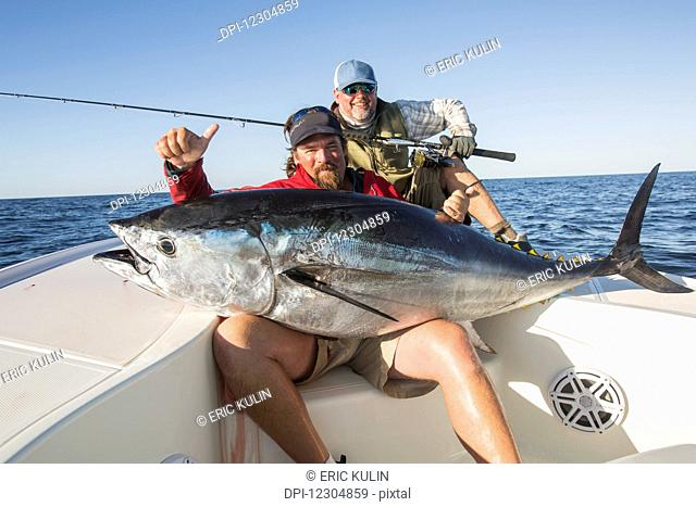 Fisherman holds a large fresh fish caught from a boat on the Atlantic ocean; Cape Cod, Massachusetts, United States of America