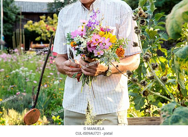 Senior man in garden, holding bunch of fresh cut flowers, mid section