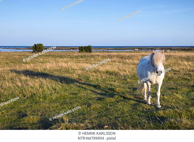 White horse on field