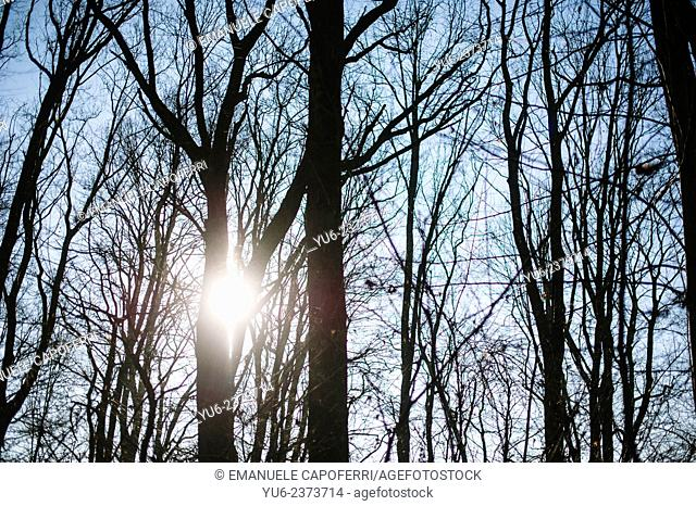 Sun filters through the bare trees of the forest