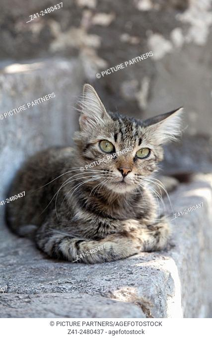 Lovely tabby cat outside on a stone wall