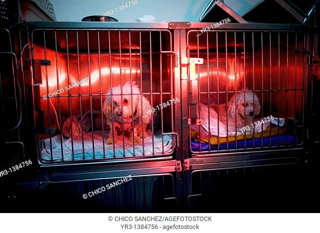 Dogs are warmed using a red lamp as he recovers from an illness at a Pet Hospital in Condesa, Mexico City, Mexico, February 4, 2011