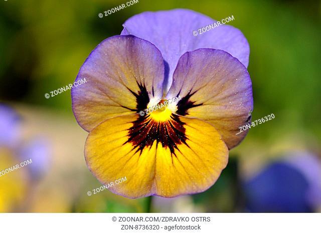 Blume, Blüte, Natur, Pflanze, Nahaufnahme, Farben, Frühling, Flora
