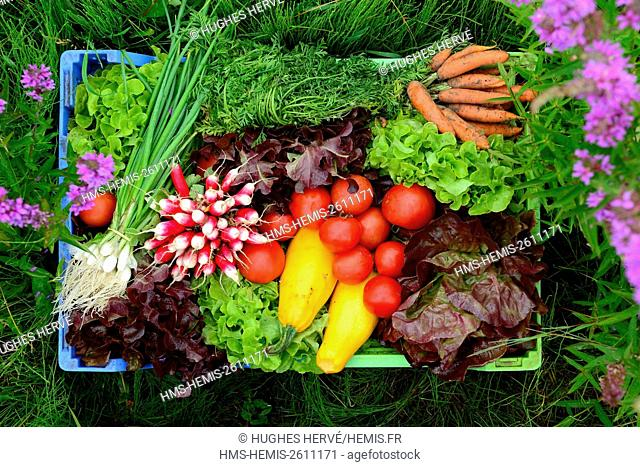 France, Somme, Amiens, the Hortillonnages, floating gardens, basket of fresh vegetables
