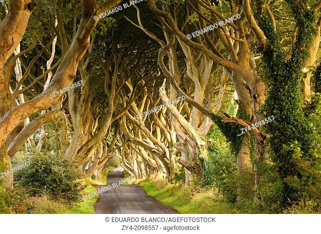 The dark Hedges, County Antrim, Nort Ireland, United Kingdom