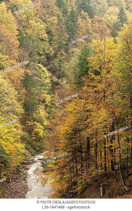 The Bieszczady Mountains forest  Poland