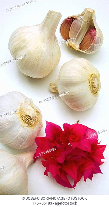 Dried garlic (Allium sativa)