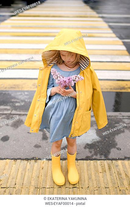 Girl wearing yellow rainjacket, standing on zebra crossing, holding lilac
