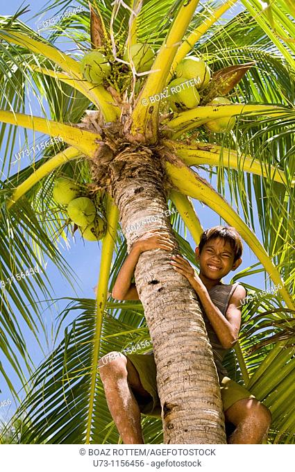 A boy climbing up a coconut tree on a tropical island in The Philippines