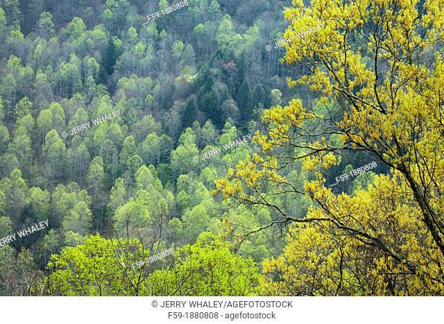 Spring Images, Blue Ridge Parkway, North Carolina