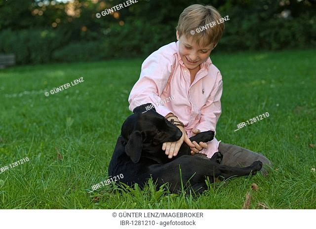 Boy, 10, playing with a labrador puppy