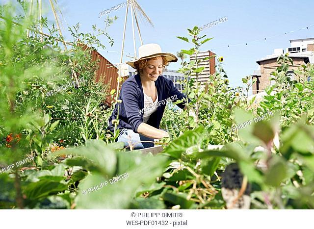 Smiling young woman wearing straw hat urban gardening