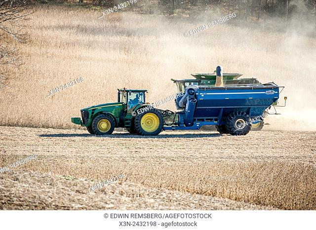 Harvesting soybeans in Jarrettsville, Maryland, USA