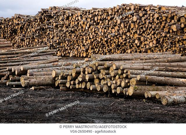 Piles of freshly cut timber logs at a lumber mill, Quebec, Canada