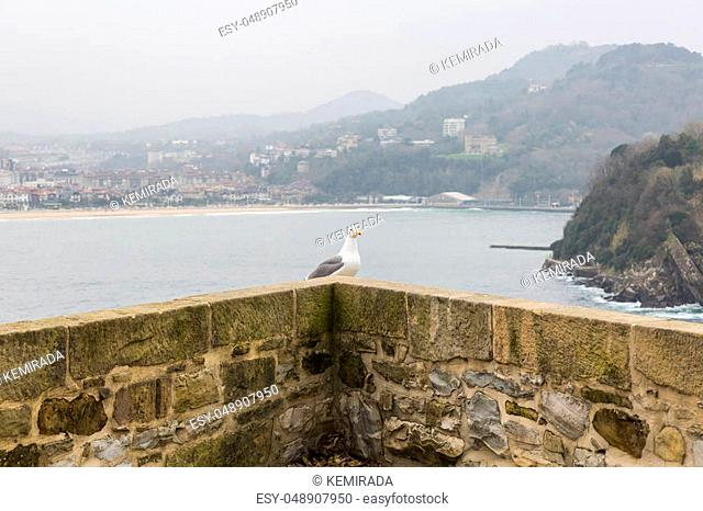 seagull on wall with landscape background. San Sebastian, Spain