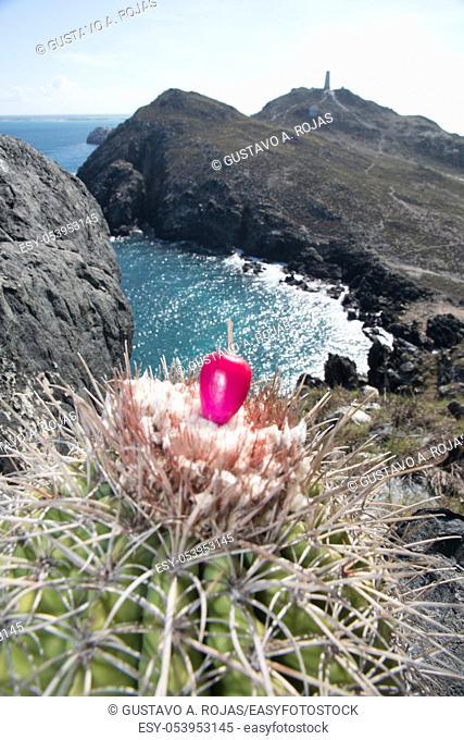 pichigüey, pitigüey gran roque -Los Roques Island Melocactus curvispinus