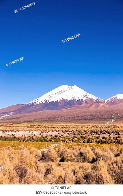 Parinacota volcano. High Andean landscape in the Andes. High Andean tundra landscape in the mountains of the Andes. The weather Andean Highlands Puna grassland...