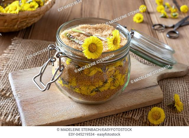 Preparation of homemade herbal syrup against cough from fresh coltsfoot flowers and cane sugar