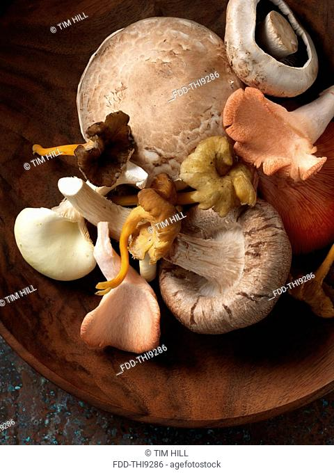 Mushrooms selection Shitaki pink oyster chantarelle field yellow foot