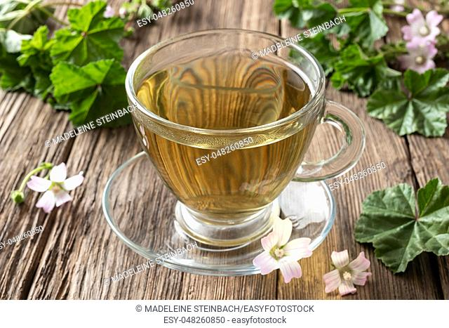 A cup of herbal tea with fresh blooming dwarf mallow