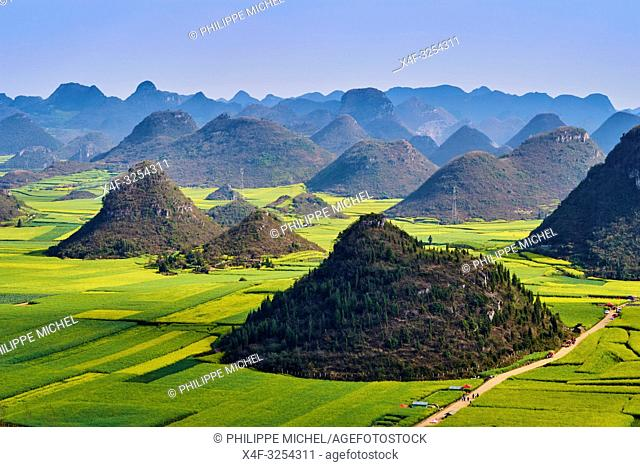China, Yunnan, Luoping, Fields of rapeseed flowers in bloom