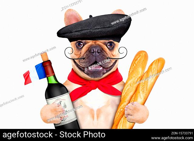 french bulldog with red wine and baguette and french beret hat, isolated on white background