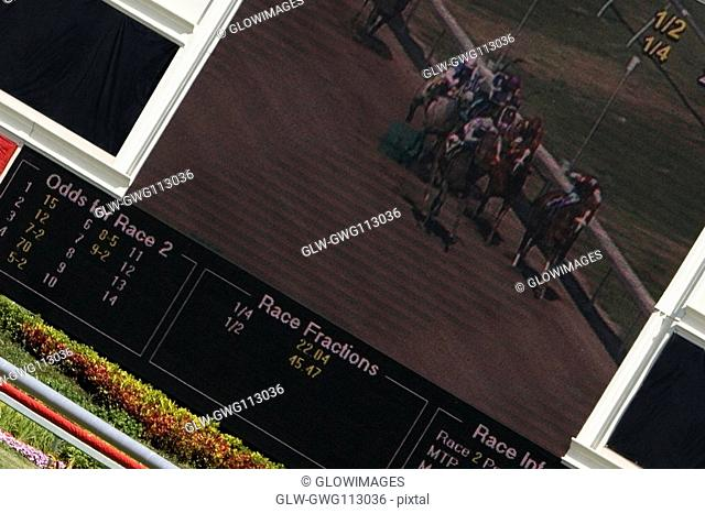 Visual screen in a horse racing stadium
