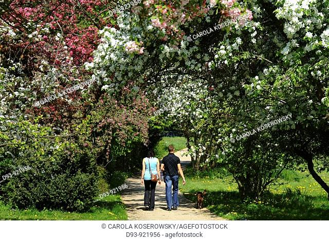 Nature, spring, landscape, trees, blossoms, couple