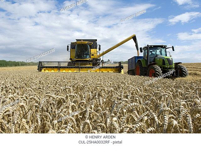 Combine harvester unloading wheat
