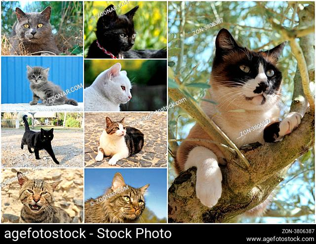 composite picture with tabby cat and kitten in the nature