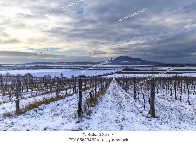 Winter vineyards under Palava near Sonberk, South Moravia, Czech Republic