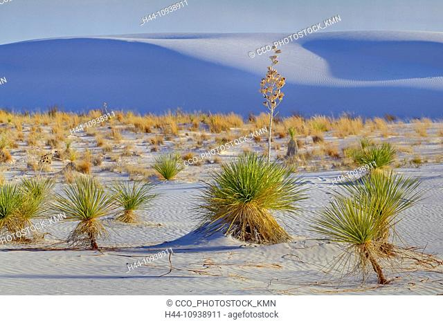 USA, United States, America, New Mexico, Alamogordo, American, Southwest, White Sands, National Monument, Yucca, plant, sand dunes, dunes, white sand, sunset