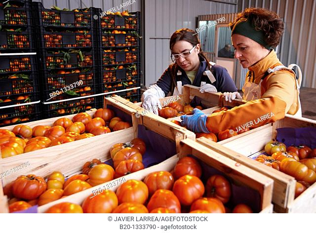 Azti-Tecnalia researchers, Cleanfeed project (prevention of vegetal waste generation and reuse for animal feed), Mercabilbao fruits and vegetables wholesale...