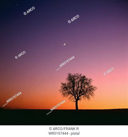 Tree, in, front, of, evening, sky, with, moon, Baden-Wurttemberg, Germany