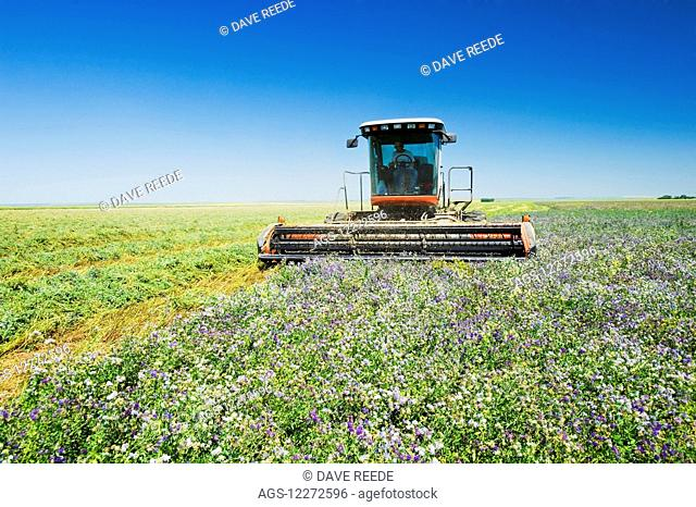 Cutting alfalfa, near Ponteix; Saskatchewan, Canada